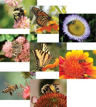 UC Davis Honey - Insects and Flowers (Set of 8 Cards)