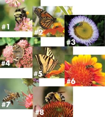 UC Davis Honey - Insects and Flowers (Single Cards)