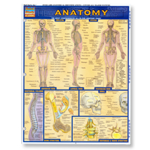 Anatomy Bar Chart