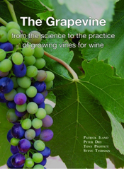 Image For The Grapevine