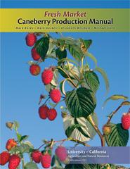 Image For Fresh Market Caneberry Production Manual