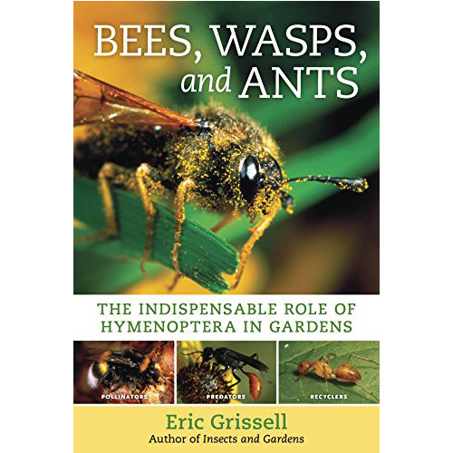 Image For Bees, Wasps, and Ants