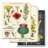 Cover Image for Cavallini & Co. Mushrooms 3 Mini Notebooks